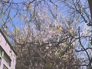 Backyardblossoms