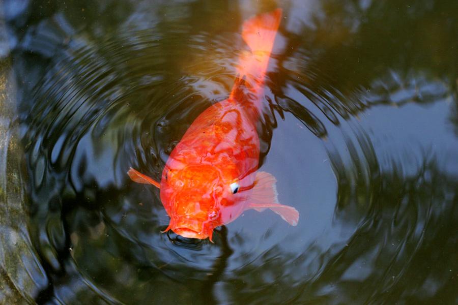 Fishfish