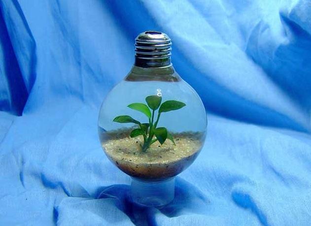 Lightbulbaquarium