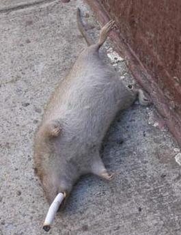 Ratsmokes