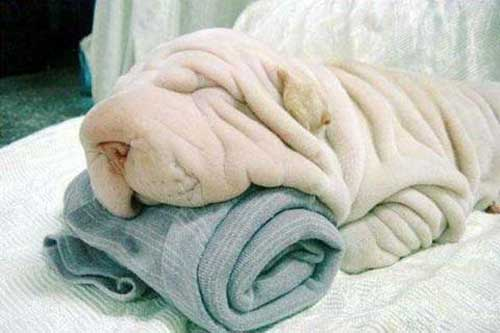 Toweldog
