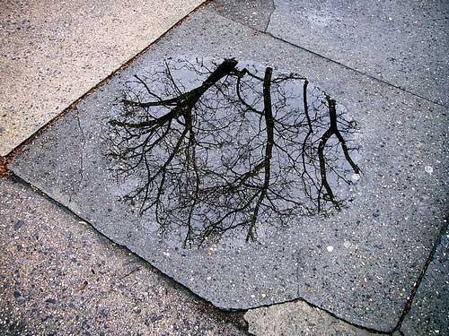 Treepuddle